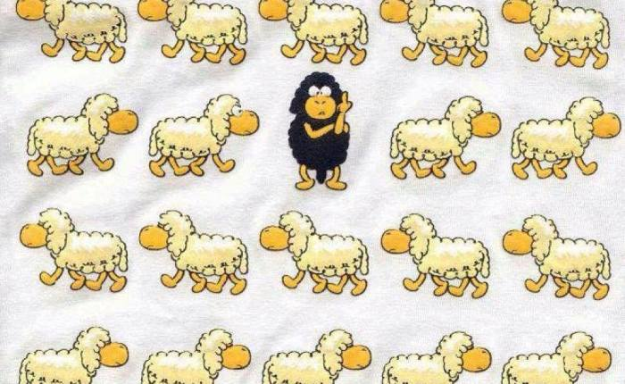 Black Sheep Rock!